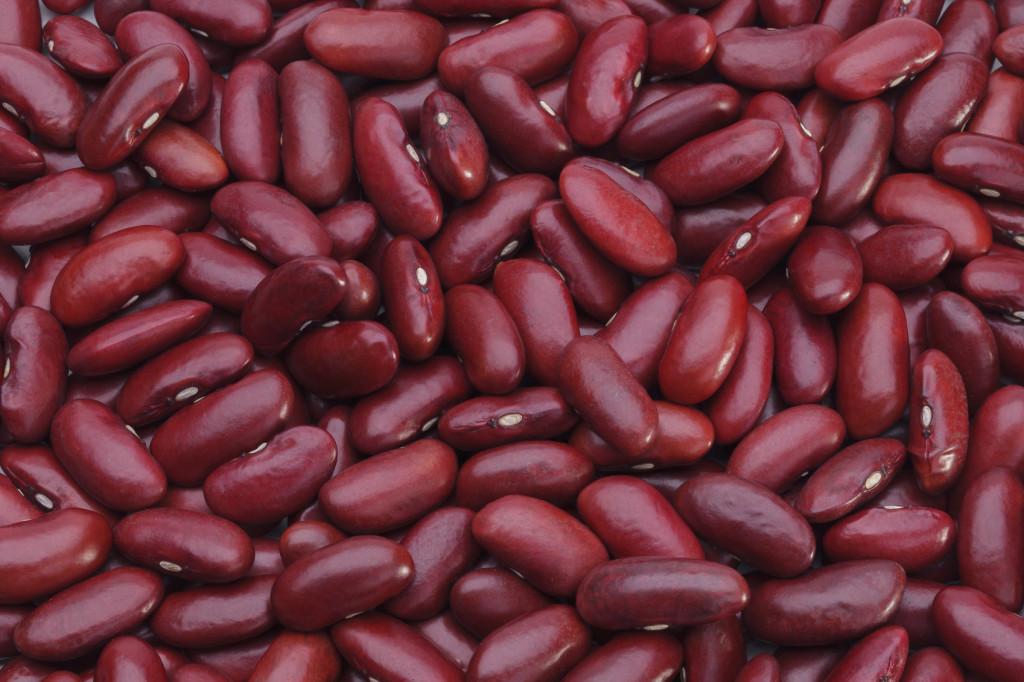 Fondation OLO | Découvrir les aliments | Les haricots (légumineuses)