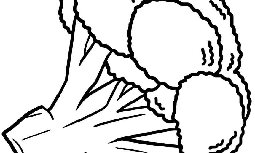 Fondation OLO | Coloriage | Brocoli