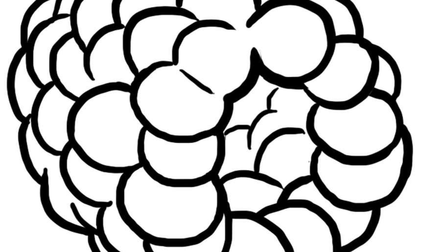 Fondation OLO | Coloriage | Framboise