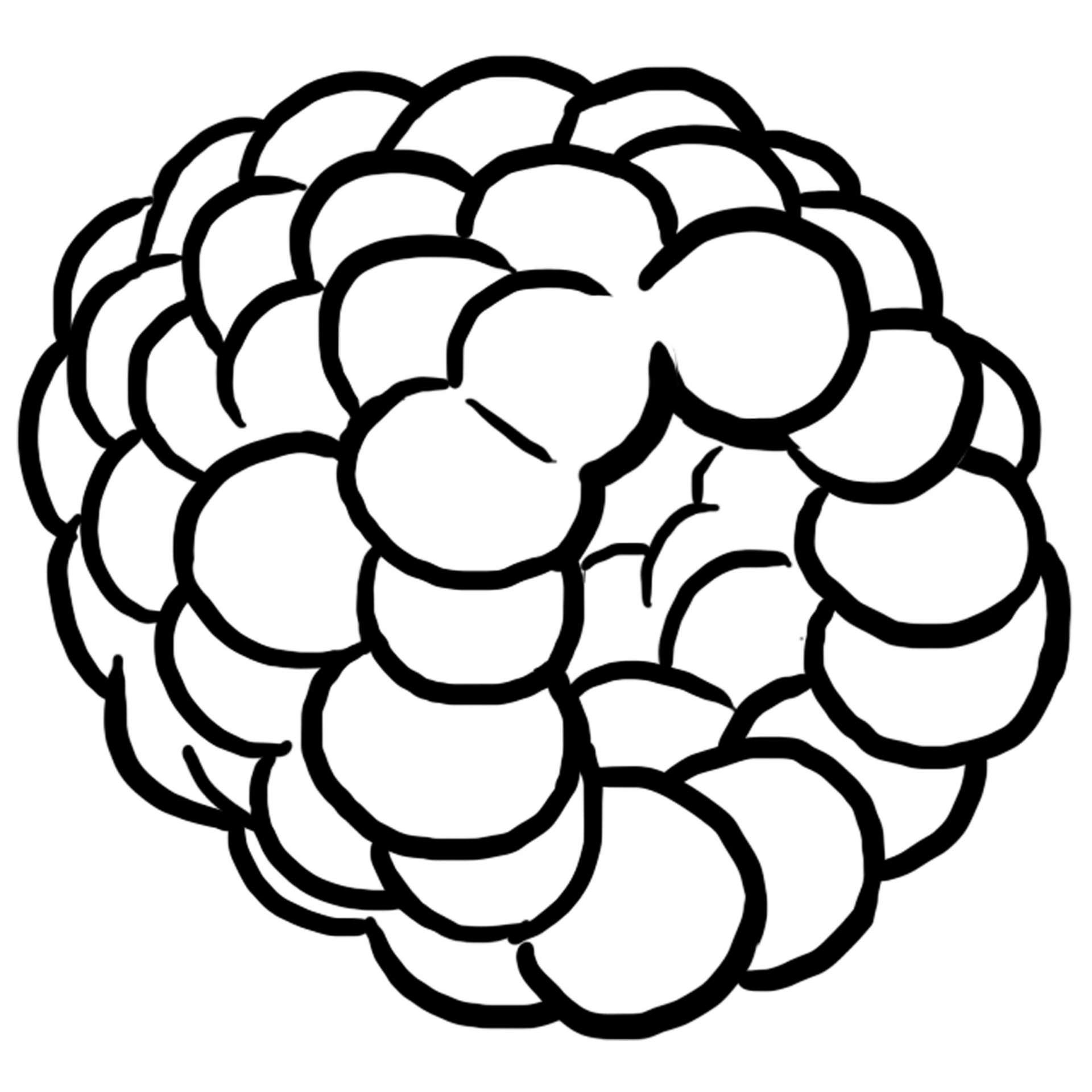 Coloriage des aliments framboise jeux et outils - Dessiner un fruit ...