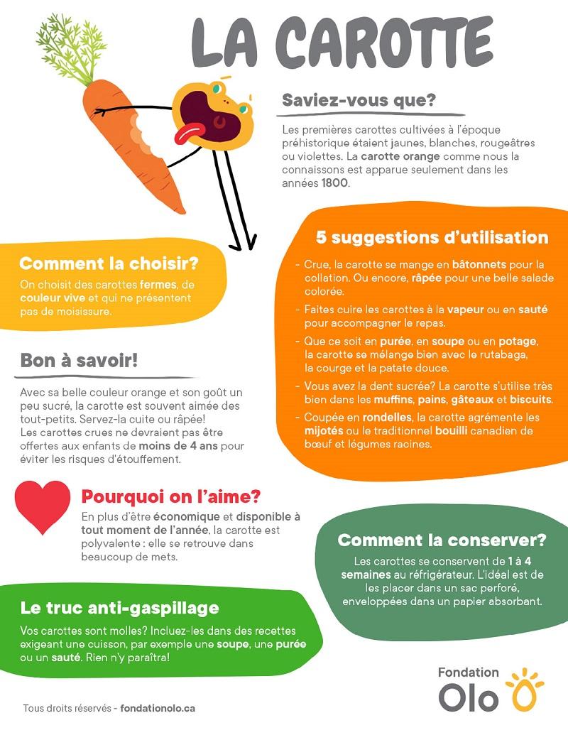 Fondation OLO | Découvrir les aliments | Carotte | Infographie